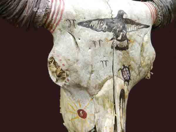 Painted Buffalo Skulls / Buffalo Skull Art